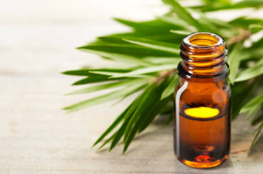 Is Tea tree oil the future of antibiotic therapy?